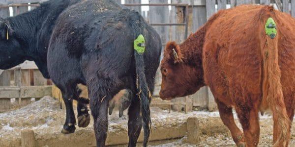Trazabilidad animal y conectividad en remoto para gestión de ganado by Batura Mobile